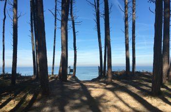 Uitzicht_bos_strand